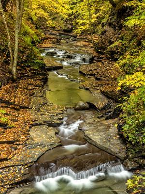 Autumn Gold in Fillmore Glen