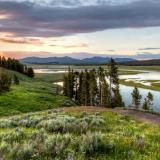 Hayden Valley Wildflower Sunset