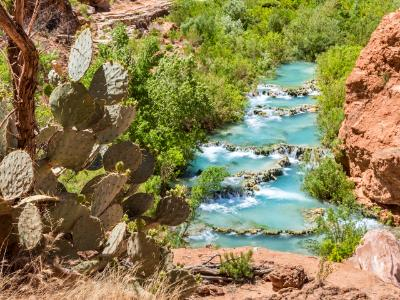 Cactus Above Havasu Creek