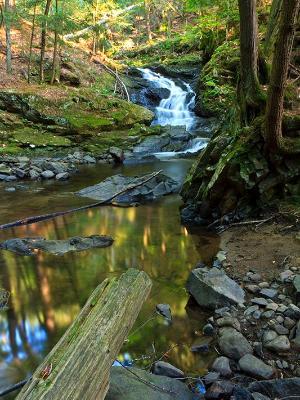 Aidrondacks Forest Reflection