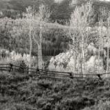 Aspen Ridge and Wooden Fence B&W
