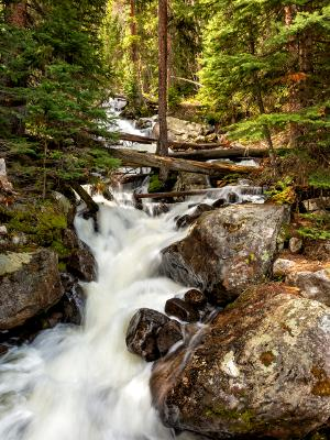 Calypso Cascades and Quiet Forest