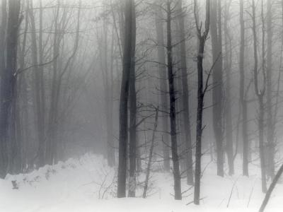 Vermont Snowy Woods