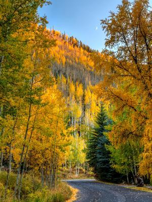 Vail Autumn WInding Road