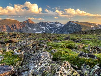 Trail Ridge Tundra Wildflowers